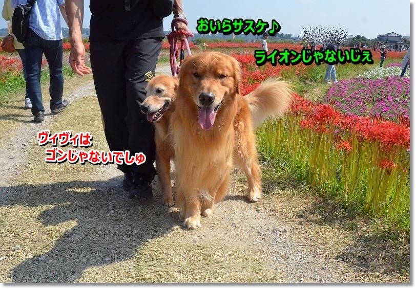 DSC_6532_2015100620004612d.jpg