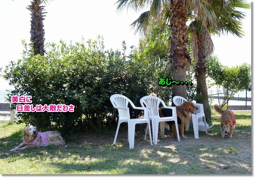 DSC_6912_201510142157223fa.jpg