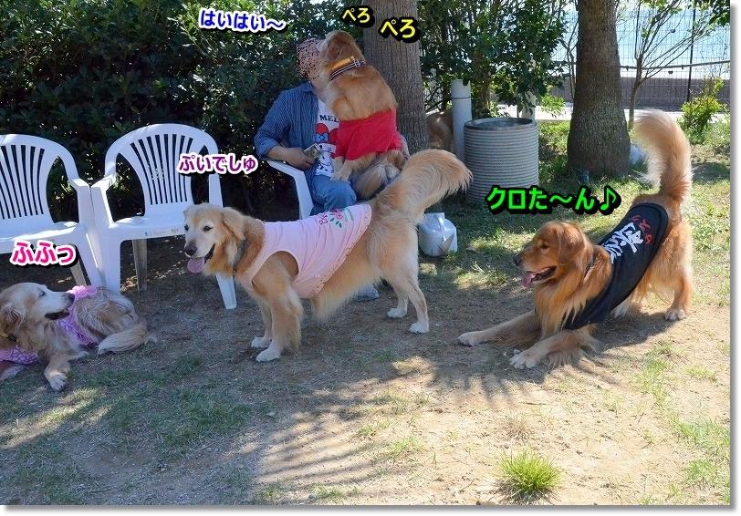 DSC_6949_20151014215936e08.jpg