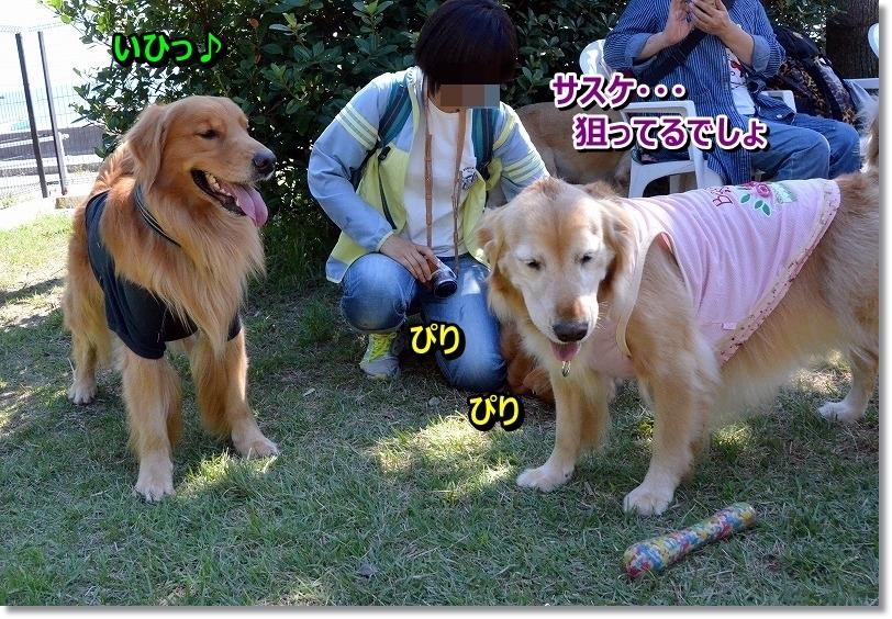 DSC_6990_20151015095013c0b.jpg