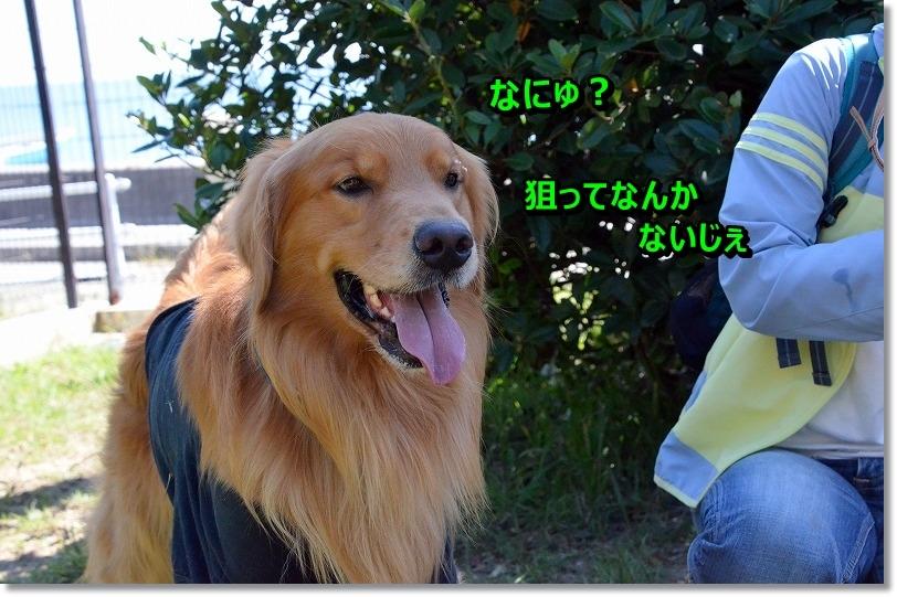 DSC_6991_201510150950143a6.jpg
