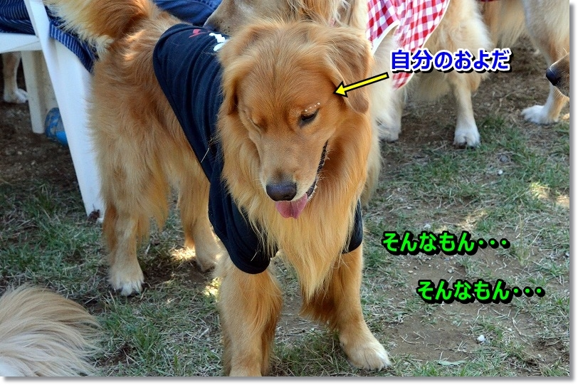 DSC_6992_201510150950166d8.jpg