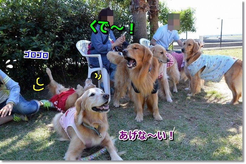 DSC_6993.jpg