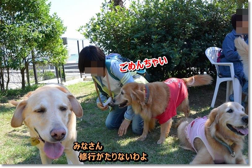 DSC_6996_20151015095046a98.jpg