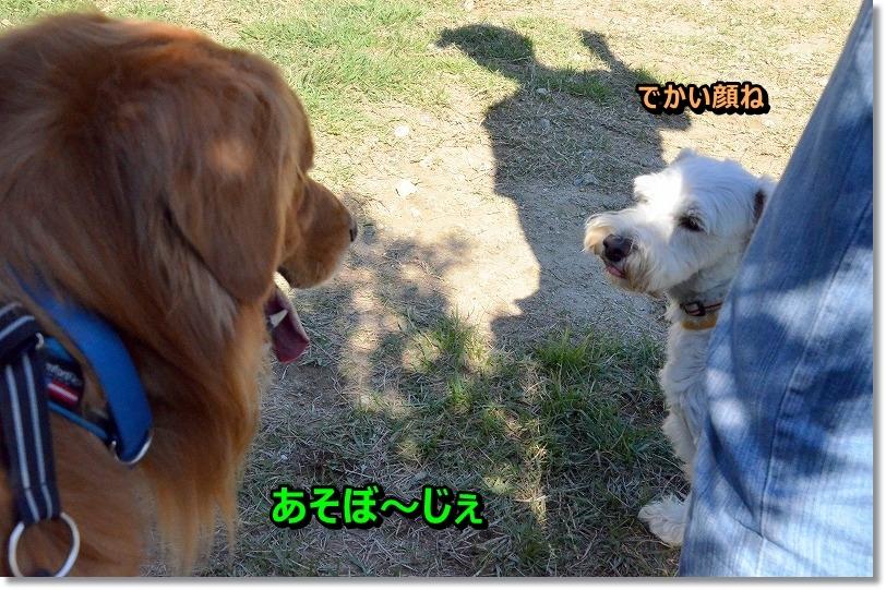 DSC_7041_20151015192930f7c.jpg