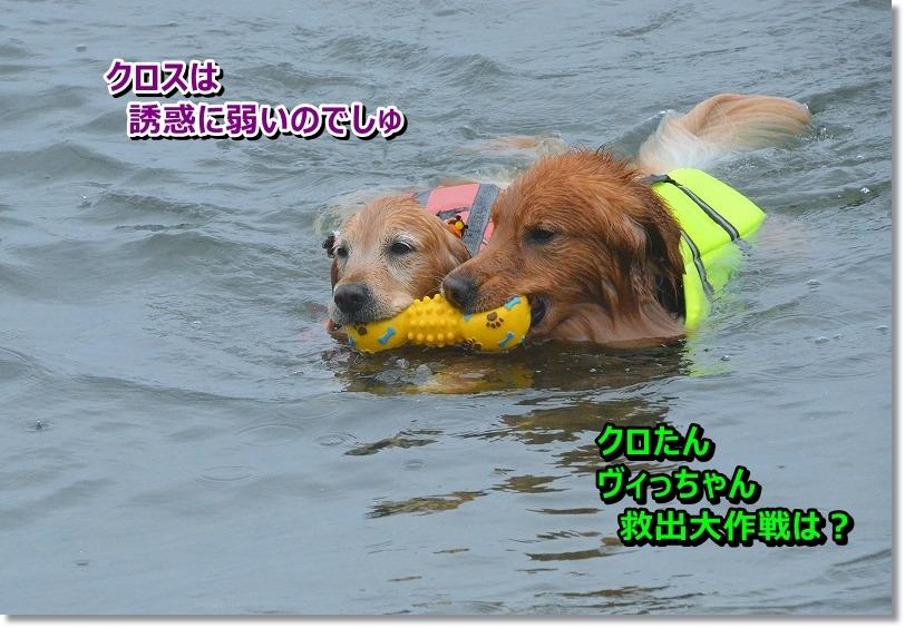 DSC_7318_20151019110923e33.jpg