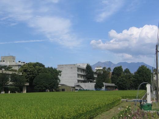 blog桜島IMG_4764