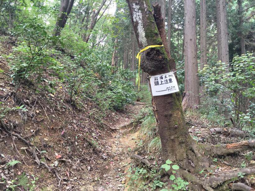 imakumakariyose58.jpg
