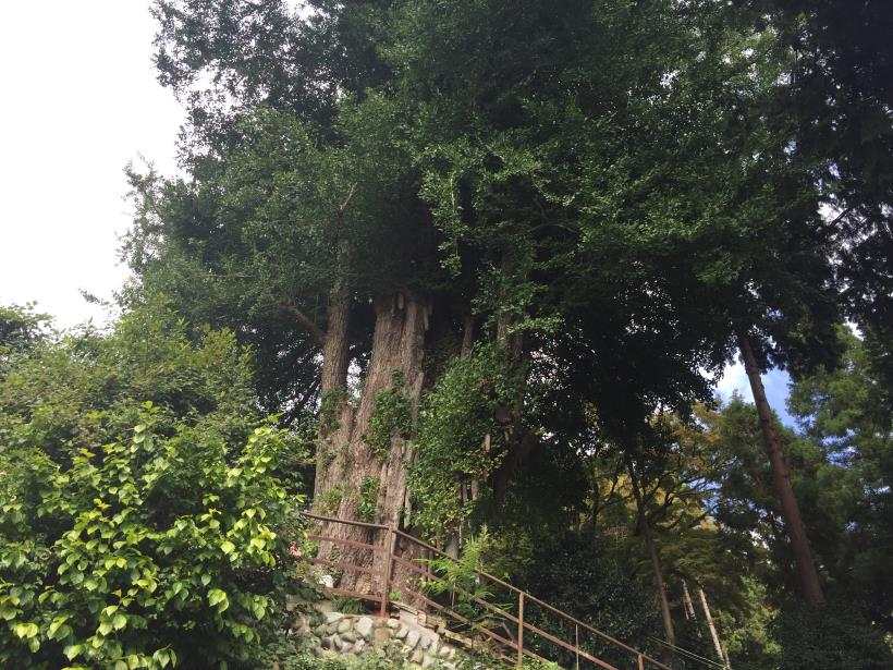 takayamahudousandou70.jpg