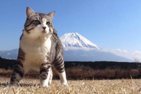 cat3.png