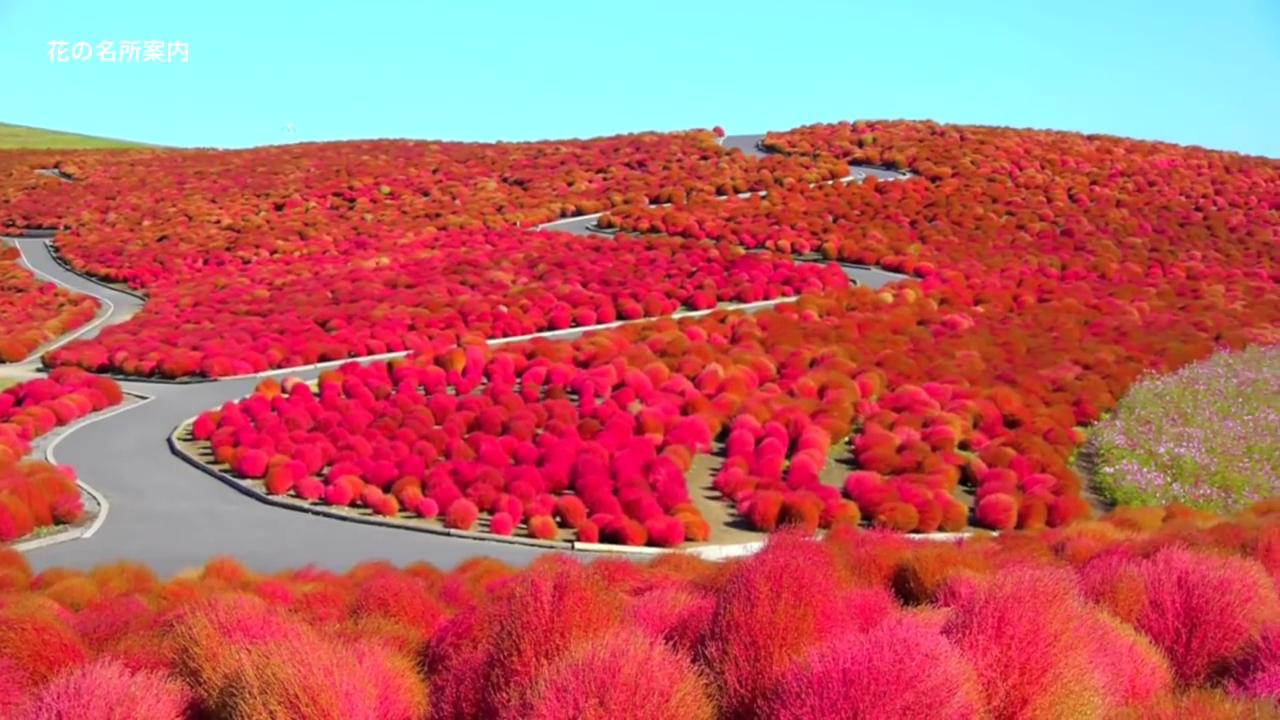 海外「日本は神の祝福を受けて ... : 無料絵本サイト : 無料