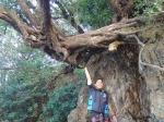 大木中を浮く!