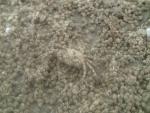 砂団子に足?
