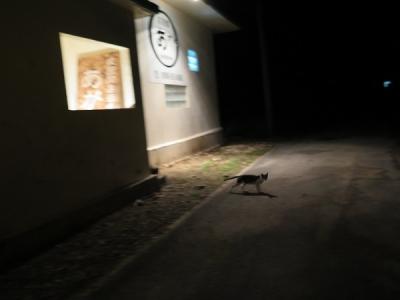 波照間の夜 ネコ