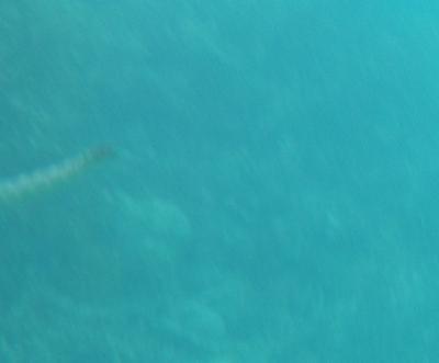 波照間ニシハマ シマウミヘビ?エラブウミヘビ?