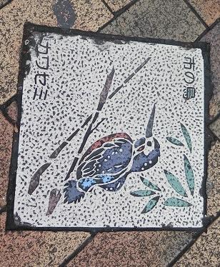 市の鳥カワセミ