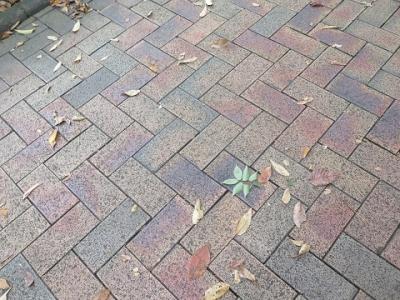 静岡 木の葉