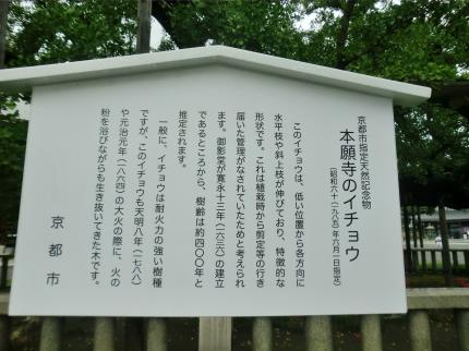 9.25 西本願寺5