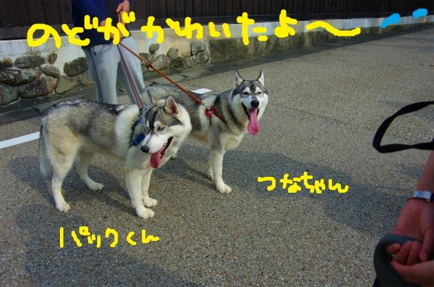 AAAA9339.jpg
