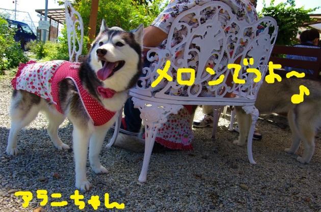 AAAA9572.jpg