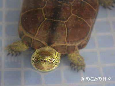 DSC_0617-suke.jpg