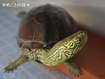 DSC_0756-SUKE.jpg