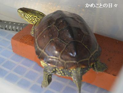 DSC_0836-s.jpg