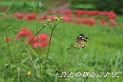 蝶・激写。