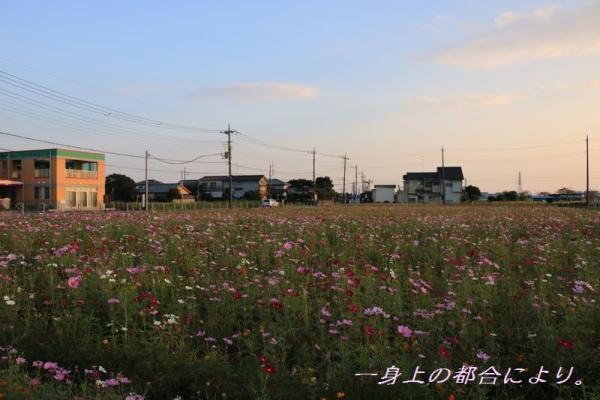IMG_0224伊佐沼