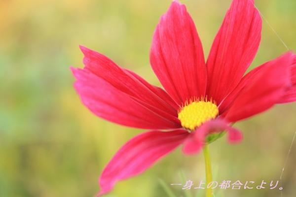 IMG_0214伊佐沼2