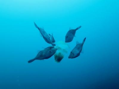 09-01 クラゲがー。