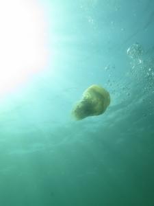 09-22 スナイロクラゲ