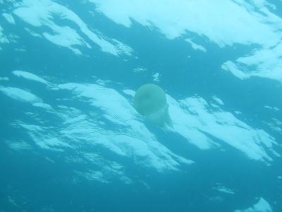 08-31 クラゲ