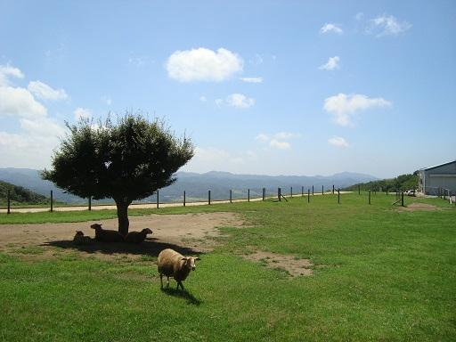 マザー牧場ひつじの牧場