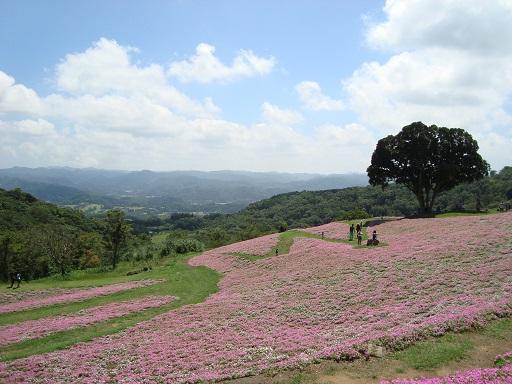 マザー牧場花の谷
