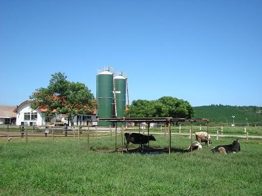 マザー牧場うしの牧場