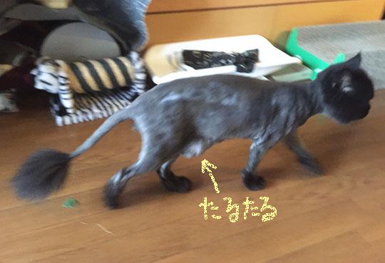 150821_hasiruKin.jpg