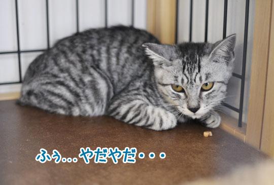 150924_0921kira7.jpg