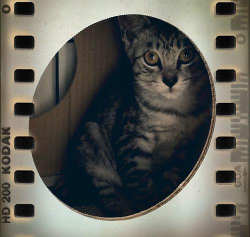 kiralin_film.jpg