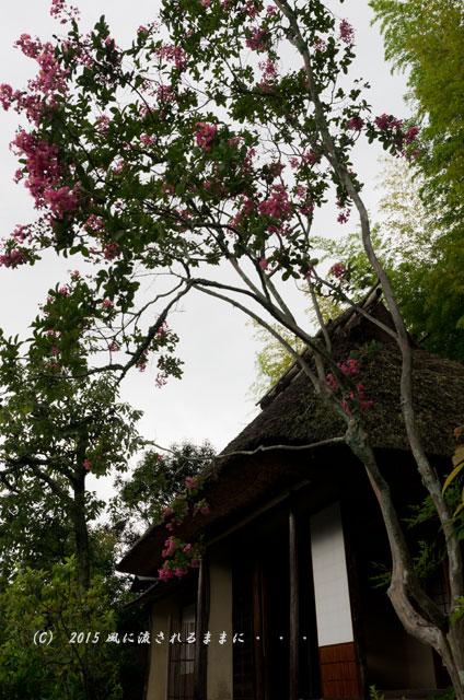 2015年8月撮影 雨の京都・等持院8