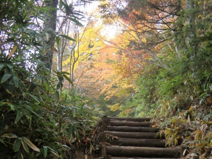 階段脇の紅葉