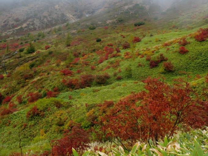 白根山と横手山間の紅葉