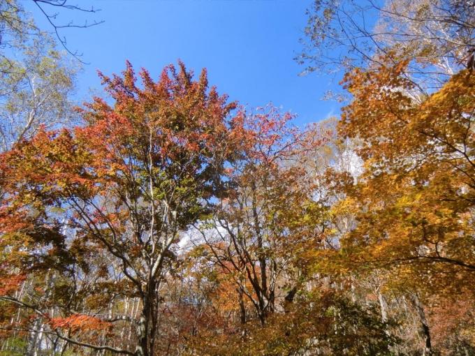 朝香嶺付近の紅葉