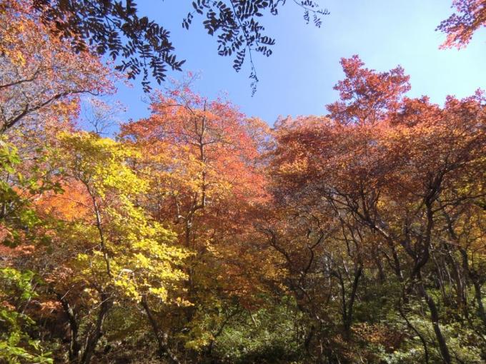 紅葉、輝く6