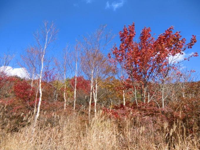 小沼湖畔の紅葉