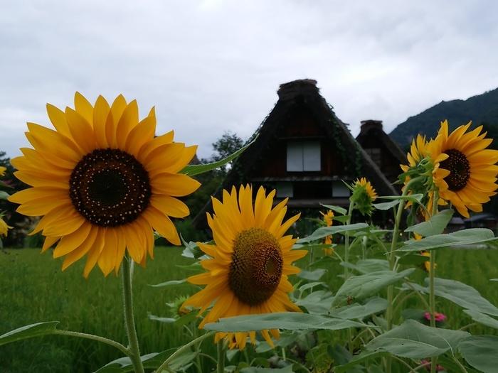 少しずつ暑さが和らぐこの季節!白川郷へ出かけよう~ ⑥