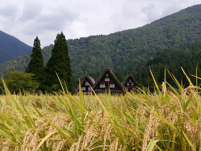 白川郷 稲刈りの後・・・・。 改めて季節の移り変わり&風景というのはアッ!という間だな~ ①