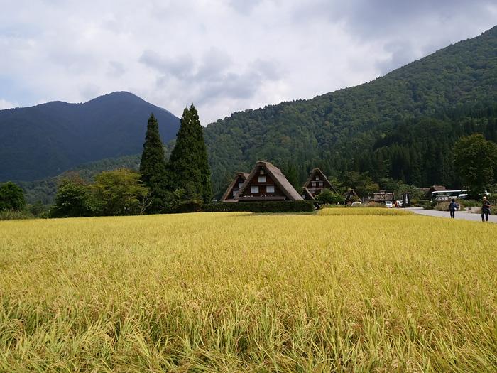 白川郷 稲刈りの後・・・・。 改めて季節の移り変わり&風景というのはアッ!という間だな~ ②