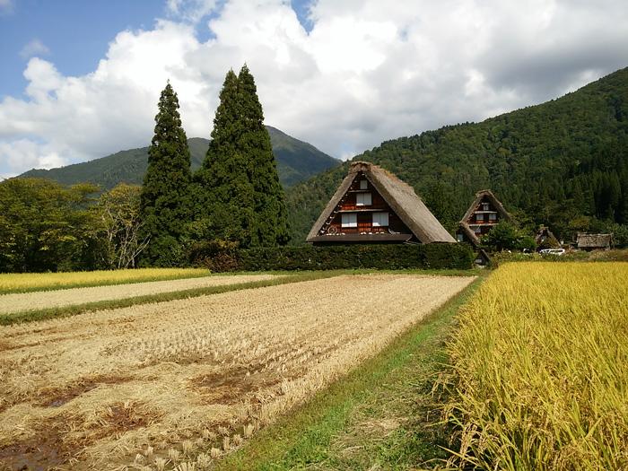 白川郷 稲刈りの後・・・・。 改めて季節の移り変わり&風景というのはアッ!という間だな~ ④