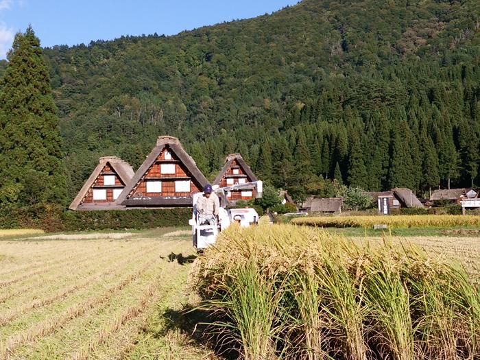 白川郷 稲刈りの後・・・・。 改めて季節の移り変わり&風景というのはアッ!という間だな~ ⑤